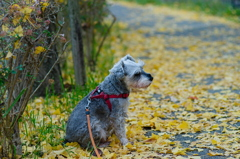 my pretty dog # 315