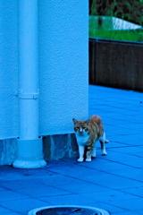 吾輩は猫である、ニャー # 651