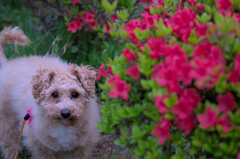 my pretty dog Ⅱ # 268