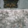 吾輩は猫である、ニャー # 905