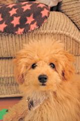 my pretty dog Ⅱ # 18