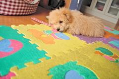my pretty dog Ⅱ # 15