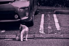 吾輩は猫である、ニャー # 1037