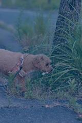 my pretty dog Ⅱ # 376
