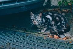 吾輩は猫である、ニャー # 1095