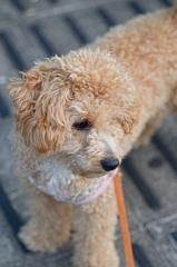my pretty dog Ⅱ # 99
