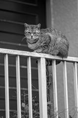 吾輩は猫である、ニャー # 1023