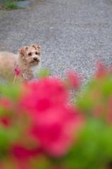 my pretty dog Ⅱ # 267