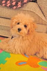 my pretty dog Ⅱ # 17