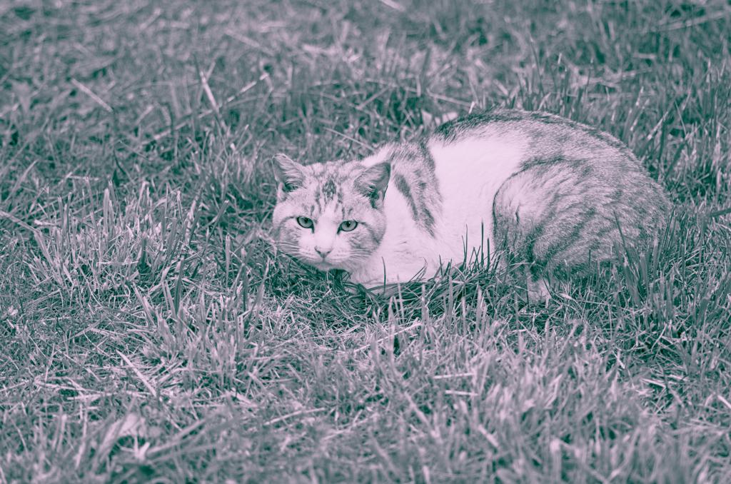 吾輩は猫である、ニャー # 977