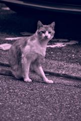 吾輩は猫である、ニャー # 1036
