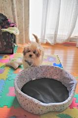 my pretty dog Ⅱ # 20