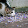 吾輩は猫である、ニャー # 110