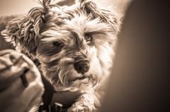 my pretty dog # 146