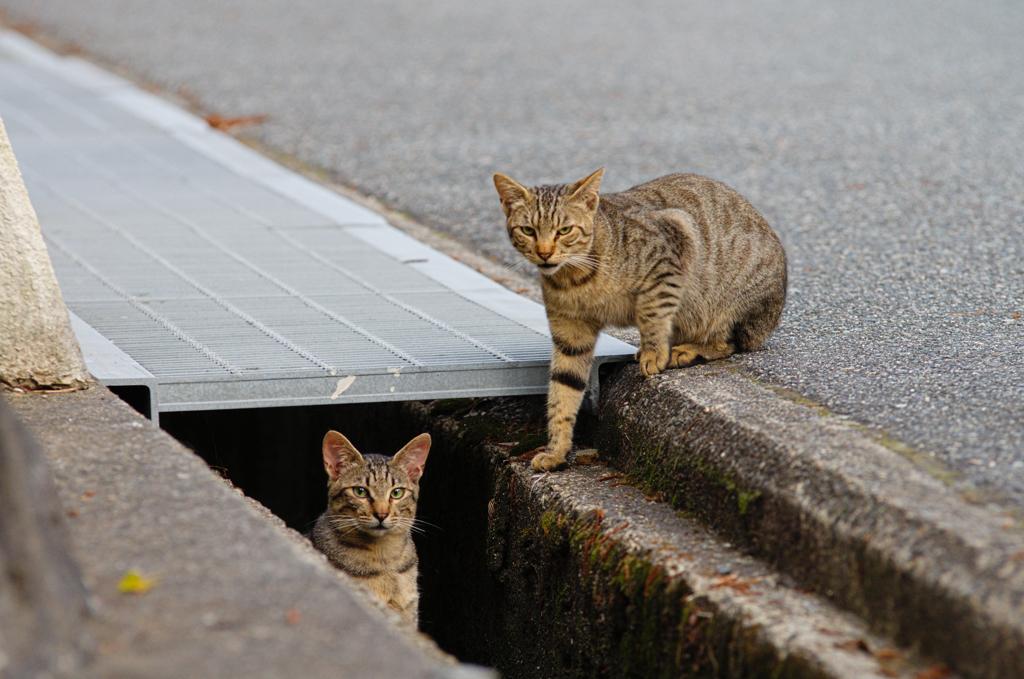 吾輩は猫である、ニャー # 404