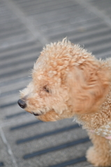 my pretty dog Ⅱ # 98