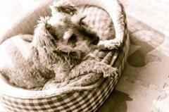 my pretty dog # 80