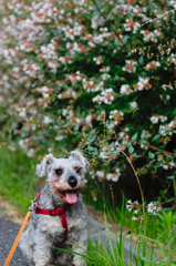 my pretty dog # 273