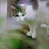 吾輩は猫である、ニャー # 312
