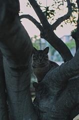 吾輩は猫である、ニャー # 1027
