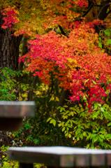 錦繍の秋 ⑩