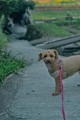 my pretty dog Ⅱ # 342