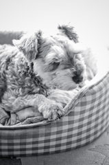 my pretty dog # 83