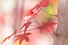 パステルな紅葉 ①