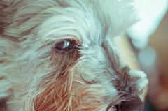 my pretty dog # 139