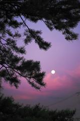 the look of the sky # 17 ~月と松の木~
