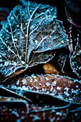 霜つく #6