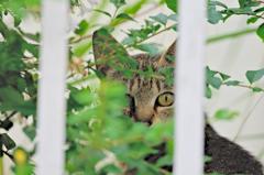 吾輩は猫である、ニャー # 378