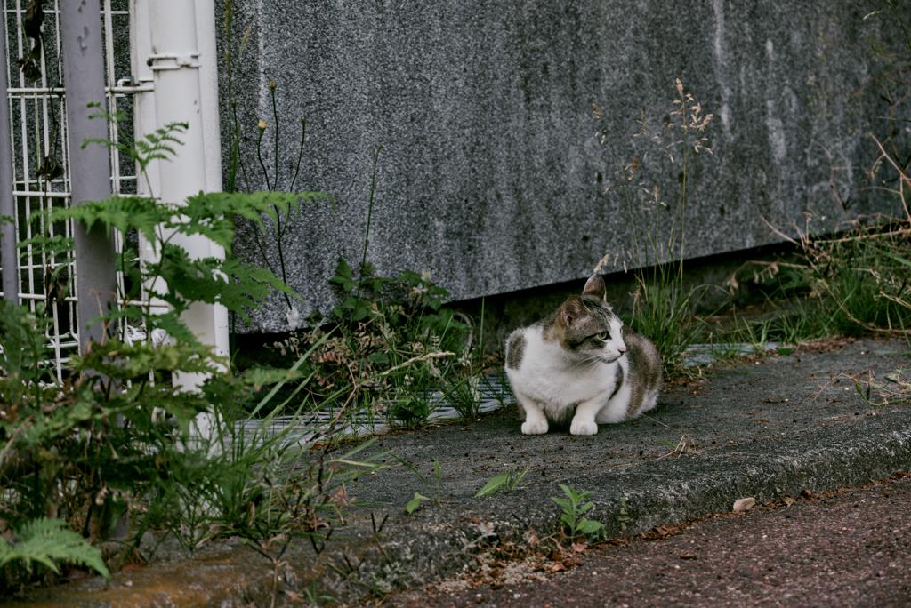 吾輩は猫である、ニャー # 1057