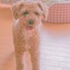 my pretty dog Ⅱ # 349