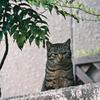 吾輩は猫である、ニャー # 909
