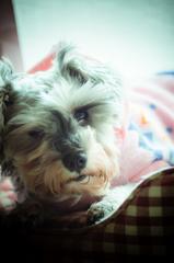 my pretty dog # 145