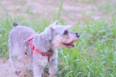my pretty dog # 277