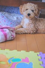 my pretty dog Ⅱ # 73