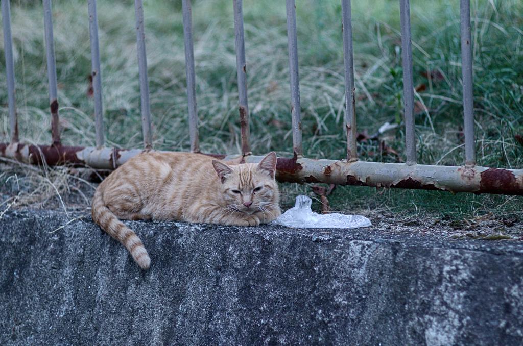 吾輩は猫である、ニャー # 519