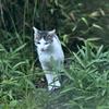 吾輩は猫である、ニャー # 249