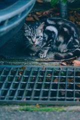 吾輩は猫である、ニャー # 1094