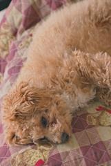 my pretty dog Ⅱ # 242