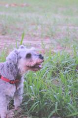 my pretty dog # 276