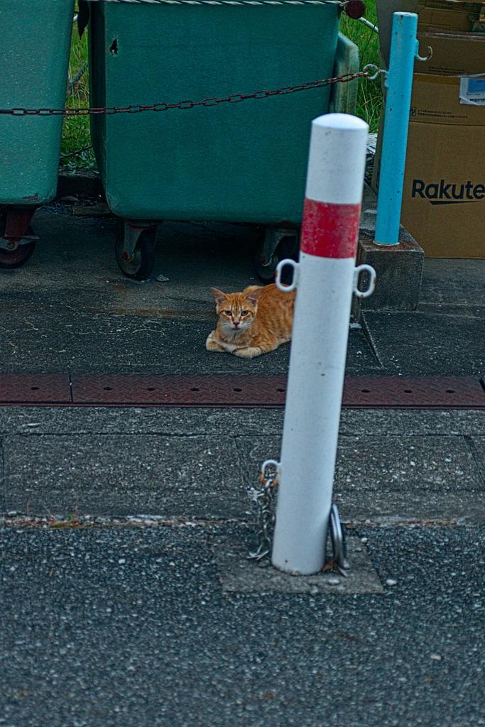吾輩は猫である、ニャー # 1175