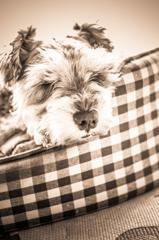 my pretty dog # 84