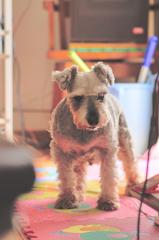 my pretty dog # 321