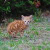 吾輩は猫である、ニャー # 769