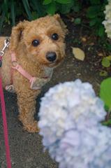 my pretty dog Ⅱ # 331
