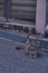 吾輩は猫である、ニャー # 1099