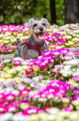 お花に囲まれて ③